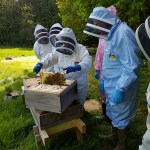Apiary practical training