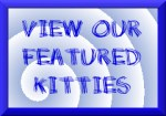 View our Featured Kitties