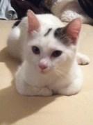 Miss Pippa 3