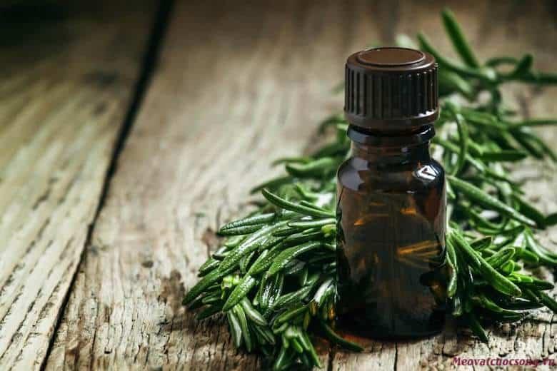 Tinh dầu cây trà trị mụn cóc