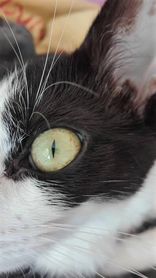 oko kočky se zúženou zorničkou