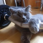 cats kittens who don't feel like working out feature