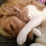 cat gifs unlikely friendships feature