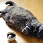 soft flyy cat bellies feature