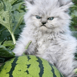 cats kittens national watermelon day feature