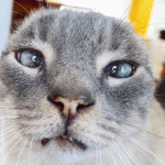 earless one eared wonders cats feature