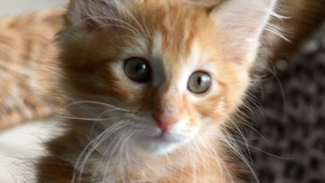 ginger girl cats feature