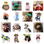 halloween costumes cats feature