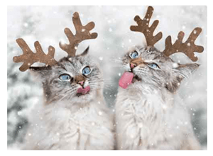 sets cat christmas cards
