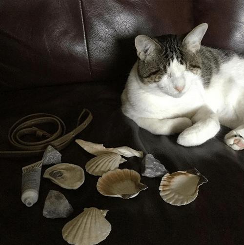 coraline blind cat