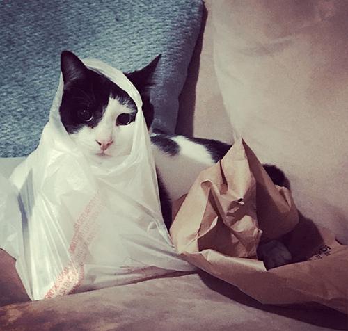 black and white radial hypoplasia rh cat
