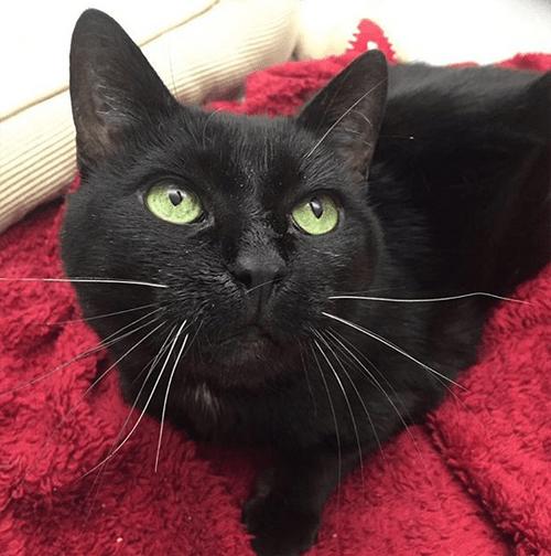 wobbly cerebellar hypoplasia cat