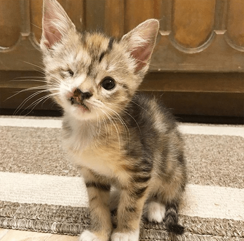 cute one eyed cat