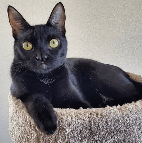 black wobbly cat with a cleft nose