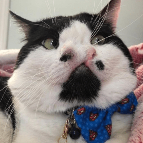cat with two noses