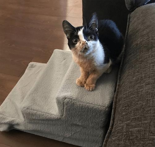 special needs dwarf kitten