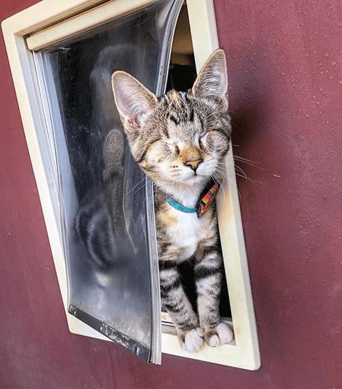 blind tabby kitten