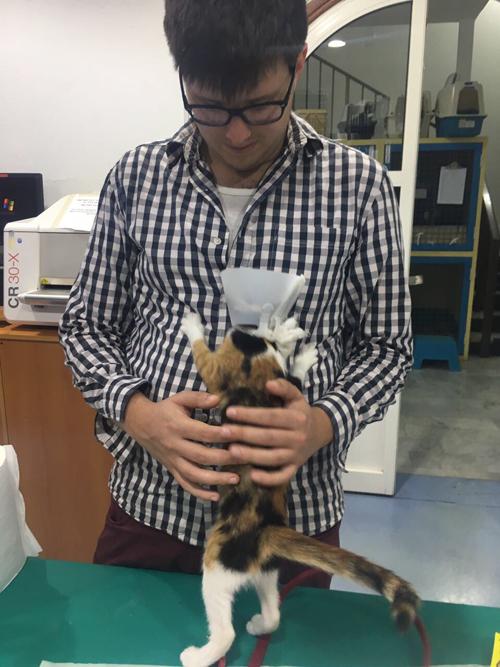 blind calico rescue kitten