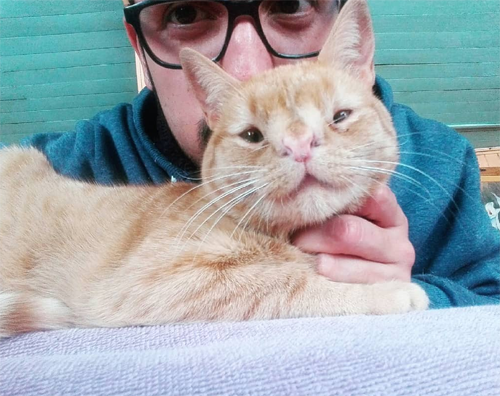 ginger female rescue cat with chromosomal abnormalities