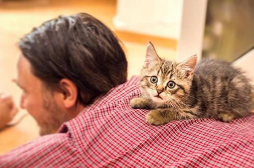 kittens with feline asthma