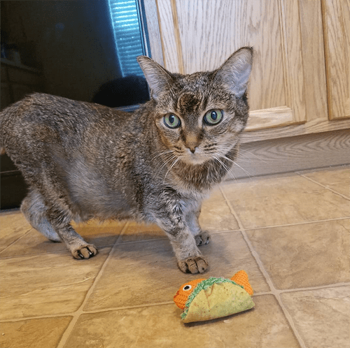 rescue cat with diabetes and cushings disease