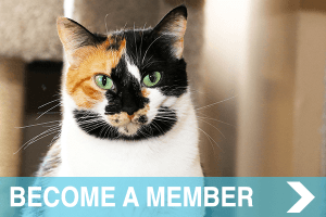 meow co - donate - MEMBER