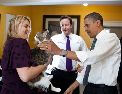 Cat Hair Traces Back to Mailing Explosive to Obama