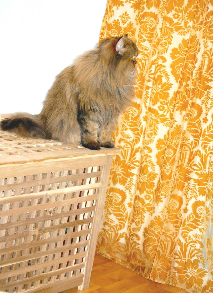 Diy Wood Pellet Litter Box Meow Lifestyle