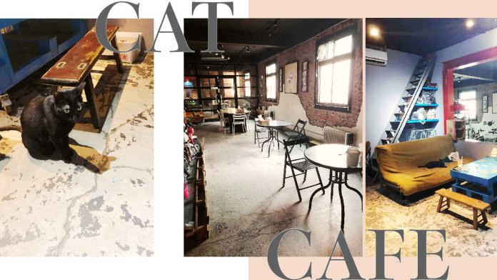 cat cafe 01 | 喵周刊 Meow Weekly