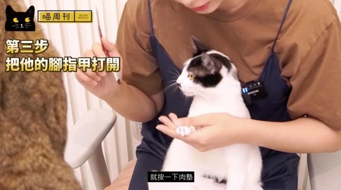5   喵周刊 Meow Weekly