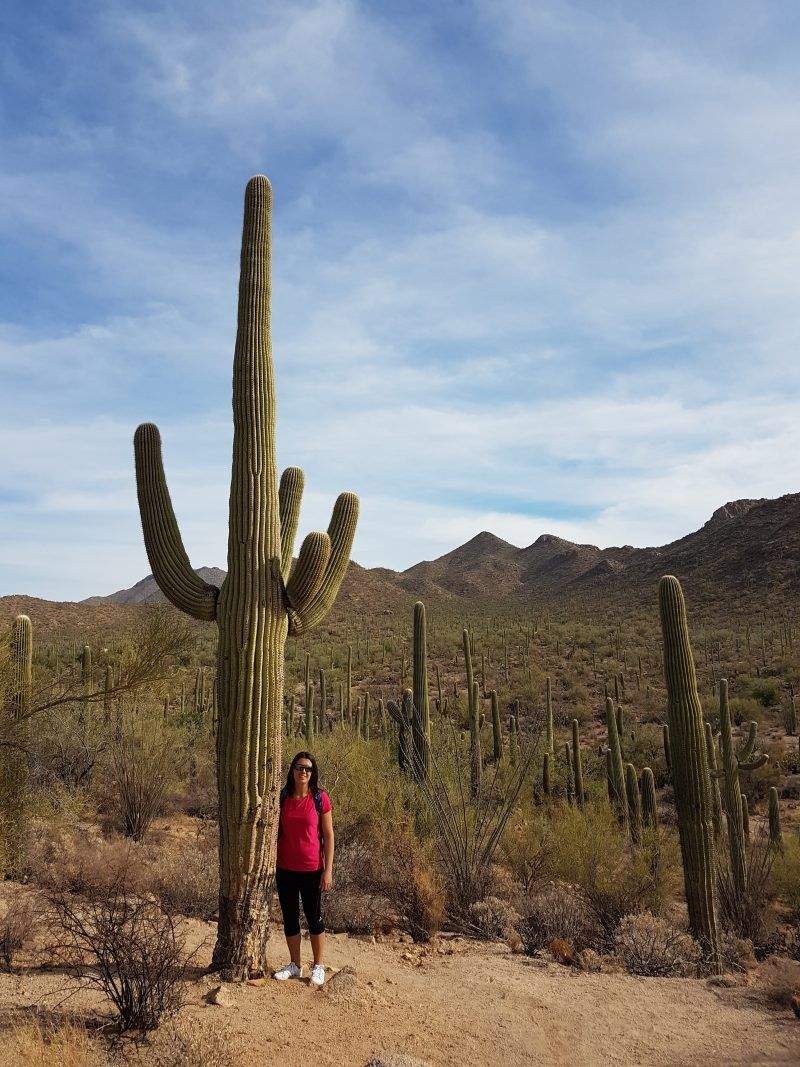 Saguaro National Park