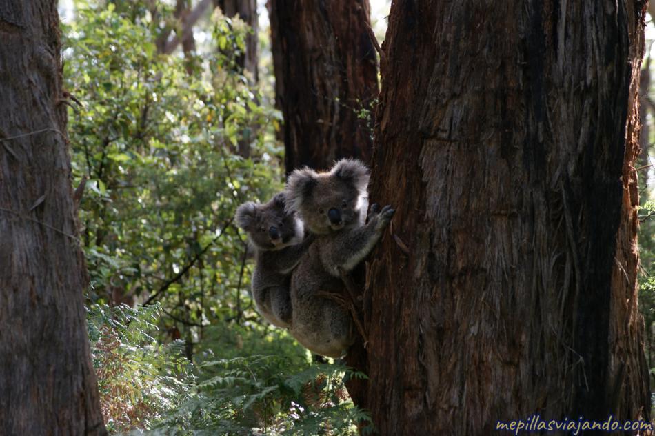 Cabo Otway, Australia