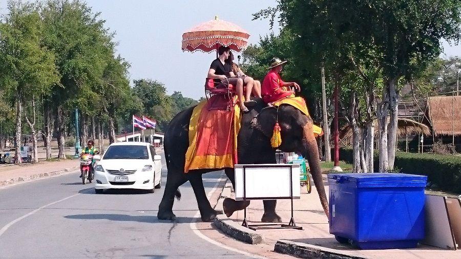 Elefantes en Ayutthaya