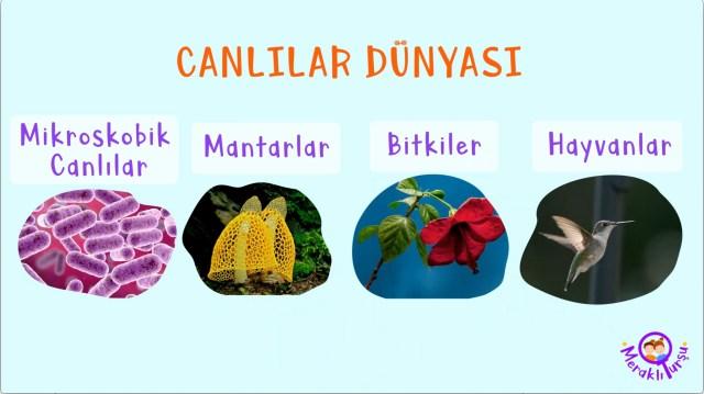 canlılar dünyası, canlıların sınıflandırılması, ek kaynak, ek materyal, ders kaynağı, meraklı turşu, çocuklar için eğlenceli bilim, meraklı çocuk, çocuk için, meraklı turşu