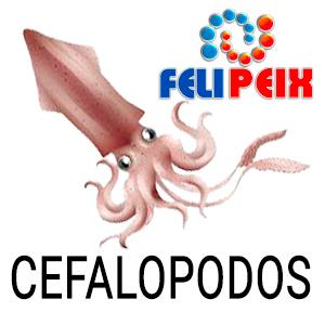 04 CEFALOPODOS