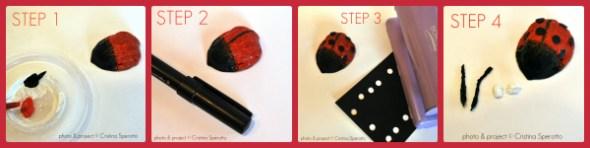 step_noce_coccinella_cristinasperotto