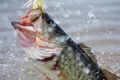 Catch a Big Fish