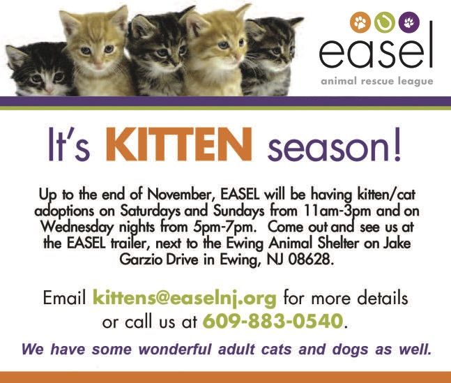 New Kitten Season Ad JPEG