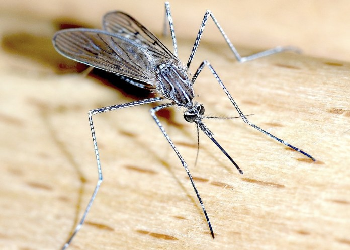 Mercer County Reminds Residents to Protect Themselves from Mosquitoes and Ticks