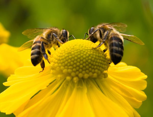 Toll Gate helps the pollinators