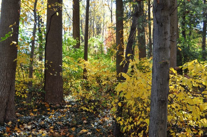 Couple Donates 10 Acres of Preserved Land in Princeton to NJ Conservation Foundation