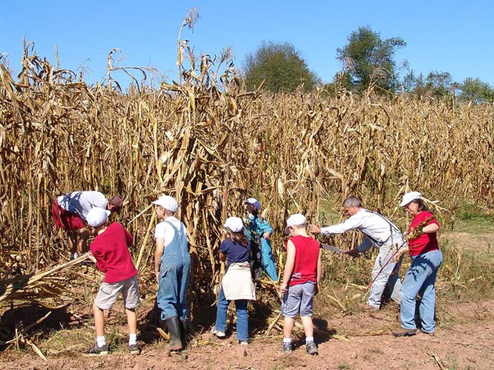 Howell Farm Invites Visitors to Participate in Hands-On Corn Harvest