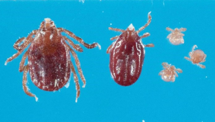 Updated Fact Sheet on Exotic Tick Species Identified on Hunterdon County Farm