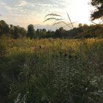 Cedar Ridge Meadow in Summer photo by Laurie Cleveland