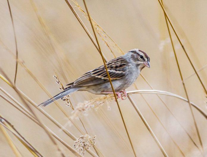Tulpehaking Nature Center Offers Birding 201 Series in September