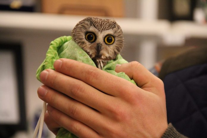 Banner Season for Owl Banding at the Watershed Institute
