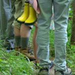Walking the Stony Brook by Laura Hawkins