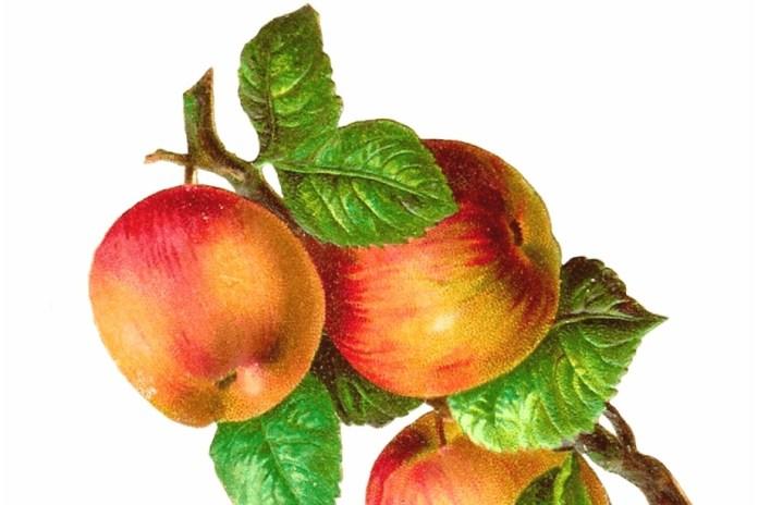 Painting Apples: Botanical Illustration Workshop with Robin Jess Celebrating Morven's Legacy Fruit