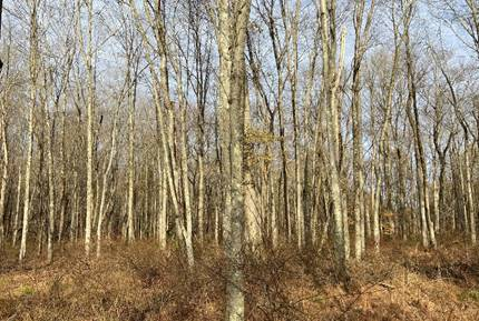 D&R Greenway works toward wildlife corridor with preservation of 38 acres in Hopewell