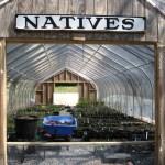NATIVE PLANT NURSERY Carolyn Foote Edelmann